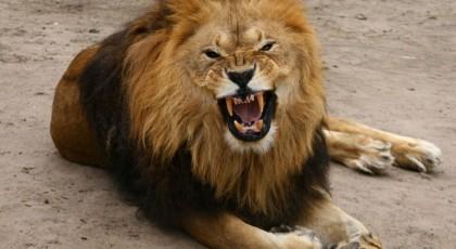 За последние 40 лет на Земле число диких животных сократилось в два раза