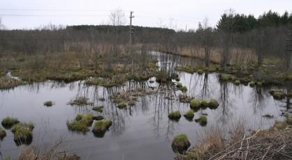 В Харьковской области трое детей утонули в болотистом водоеме